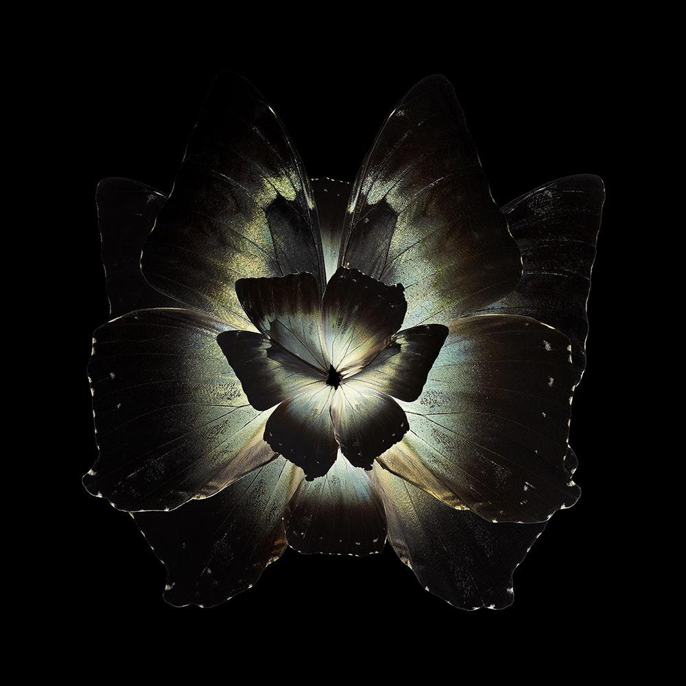 picsart蝴蝶翅膀透明素材