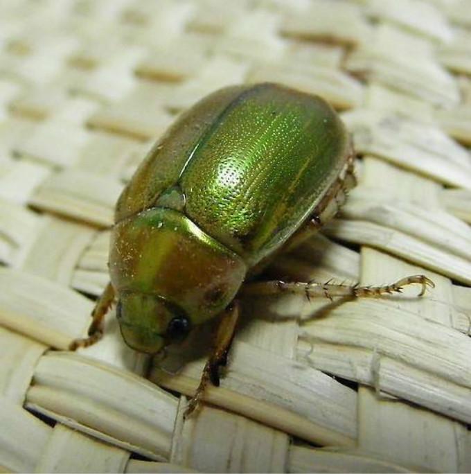 田野里的昆虫动物图片